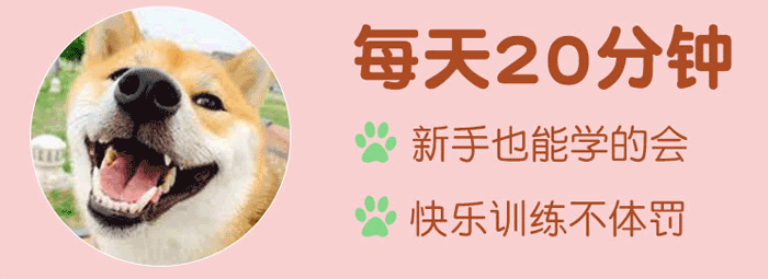【训狗教程】7天纠正不良行为(共20集)